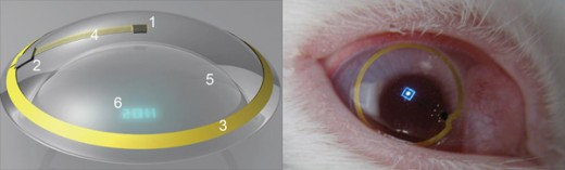 Rabbits eye 520x157 Here comes the future: Augmented reality contact lenses have been tested on rabbits