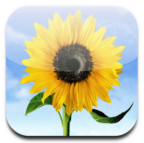 Apple Photo App Icon Apples argument that Samsung copied its software designs, summed up by a single yellow flower