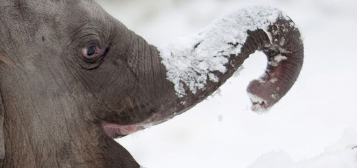 GERMANY-WEATHER-ANIMALS-ELEPHANT-FEATURE