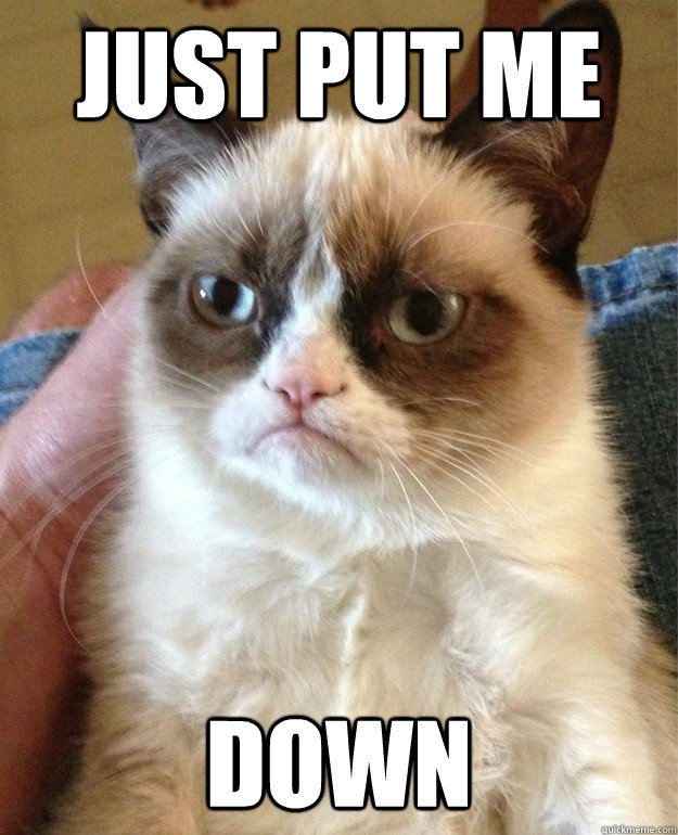 GrumpyCat 2 13 of the best memes from 2013