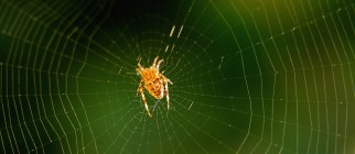 FRANCE-NATURE-ANIMALS-SPIDER