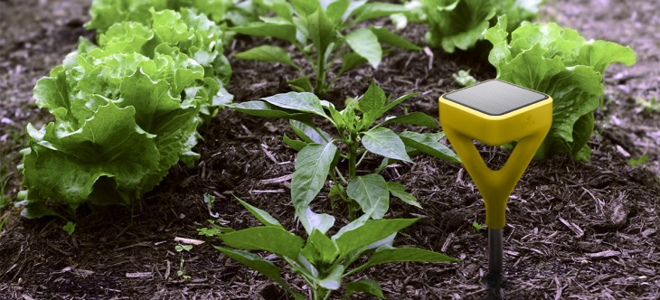Edyn wants to make your garden smart with its connected soil sensor and  watering attachment. Edyn s Soil Sensor and Hose Attachment Make Your Garden Smart